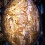 petrified-wood-crystal-for-natural-born-leader-1