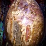 petrified-wood-crystal-for-natural-born-leader-2